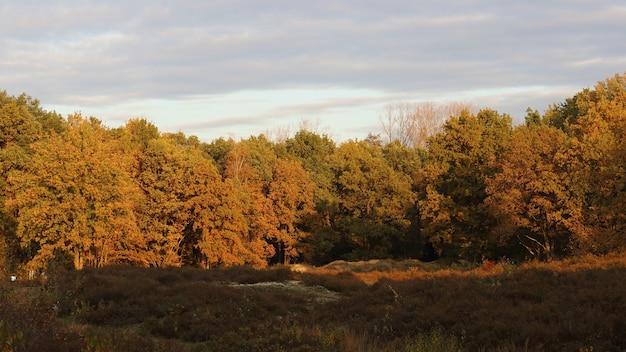 日没時の森の茶色の木の眺め 無料写真