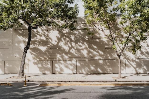 나무와 도시 거리의보기 무료 사진