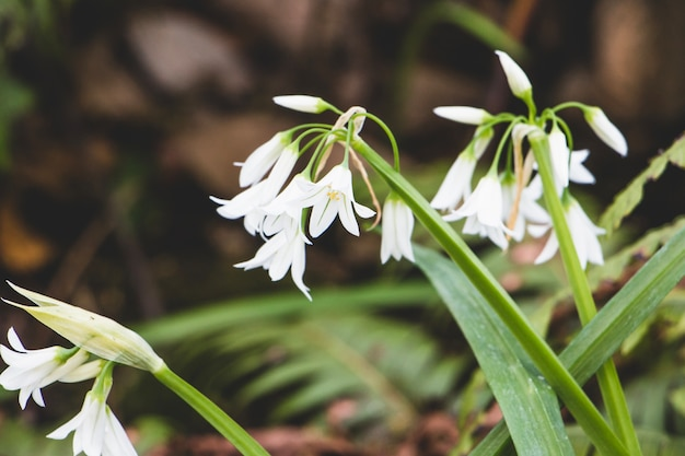 View of snowdrops in wood Free Photo