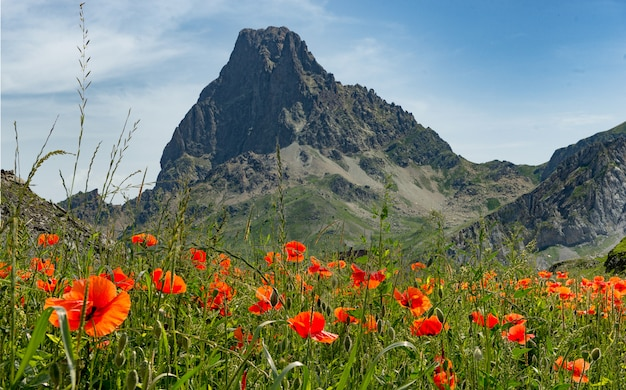View of the pic du midi d'ossau in the french pyrenees with poppies Premium Photo
