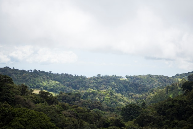View of tropical rainforest at costa rica Free Photo