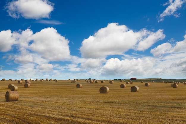 View of a wide harvested field with big yellow straw bales under the blue sky Premium Photo