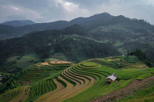 Viewpoint terraced rice fields Premium Photo