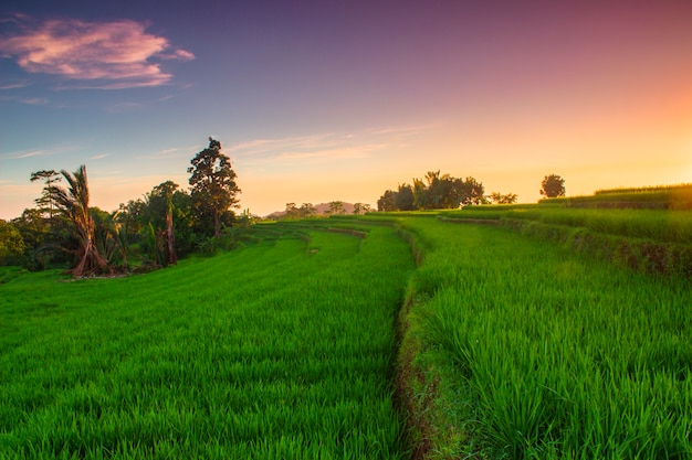 Views of rice terraces and sky when sunset in indonesia Premium Photo