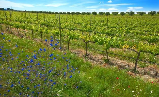 Vineyard at camino de santiago levante Premium Photo