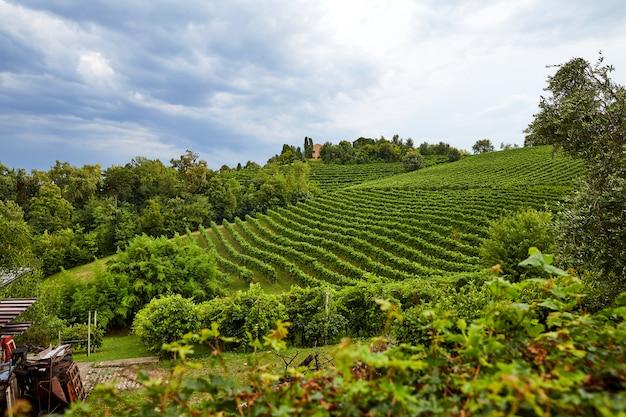 Vineyard in conegliano city Premium Photo