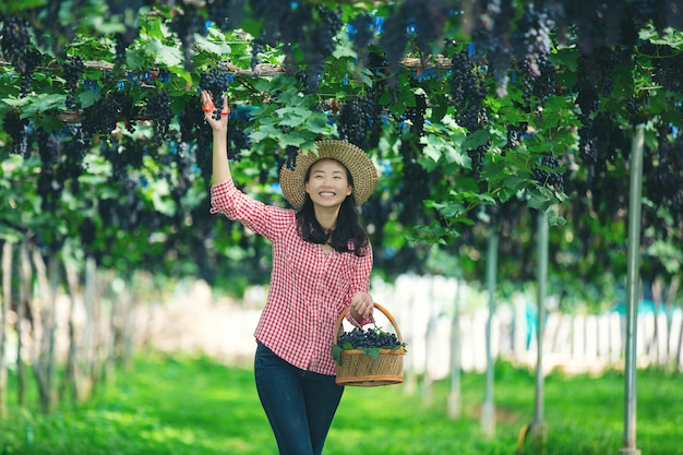 Vineyard farmers who smile and enjoy the harvest. Free Photo