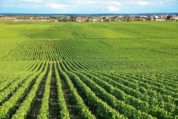 Vineyard landscape in france Free Photo