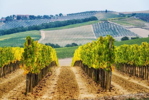 イタリアのトスカーナのブドウ畑の風景 Premium写真