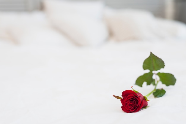 Vinous rose on bed with white linen Free Photo