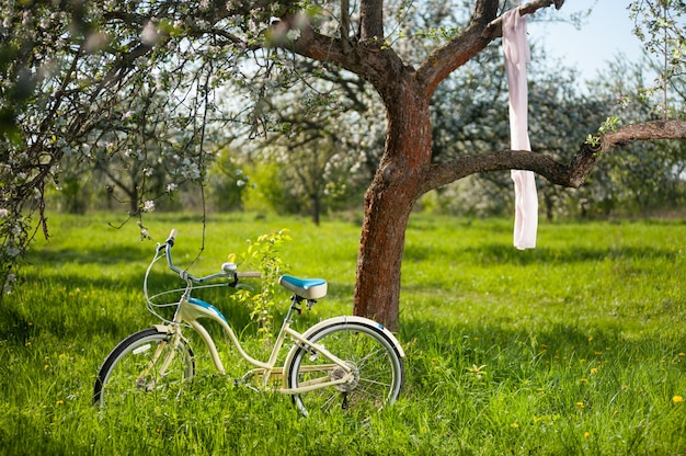 Vintage bicycle standing in the fresh green grass under flowering tree Premium Photo