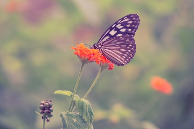 Vintage Butterfly And Orange Color Flower In Spring Retro Effect Style Pictures Free