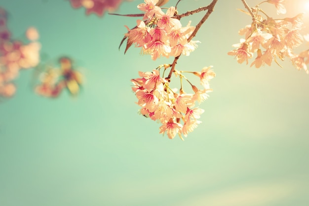Vintage nature background of beautiful cherry pink flower for Beautiful pastel colors
