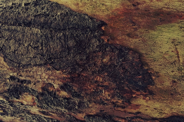 Vintage old dirty wood texture background Free Photo