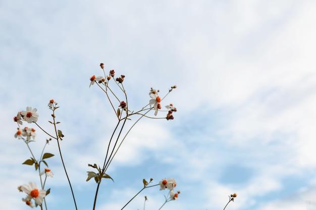ヴィンテージスタイルの夏の花の背景 Premium写真
