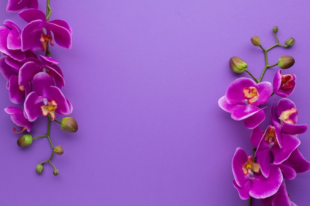 Violet copy space background with orchids Free Photo