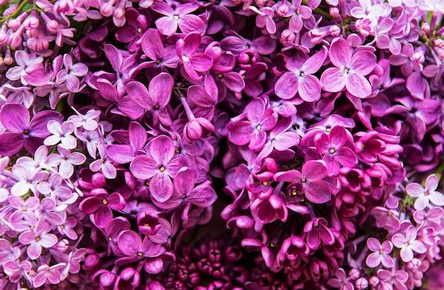紫のライラックの花の背景または有機的な自然な質感 Premium写真