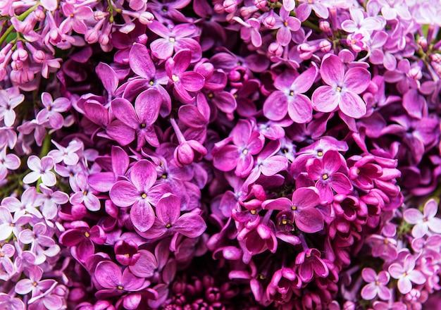 紫のライラックの花の背景または有機の自然な質感 Premium写真