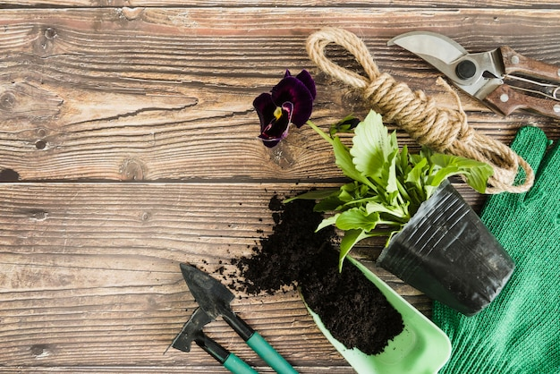 Violet pansy flower pot plant with soil; gardening tools; rope and secateurs on wooden table Free Photo