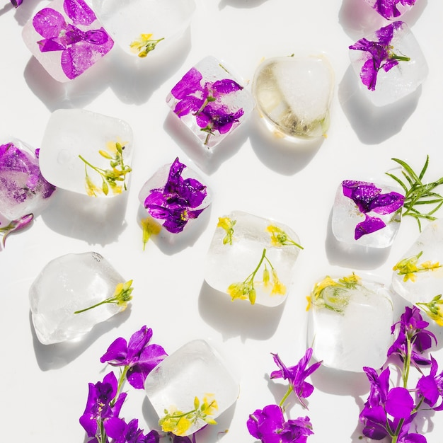 Violet and yellow flowers in ice cubes Free Photo