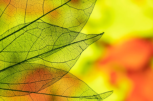 Vivid abstract autumn leaves Free Photo