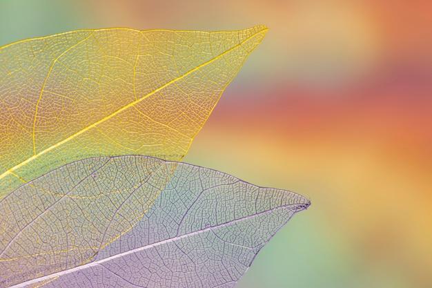 Vivid transparent autumn leaves Free Photo