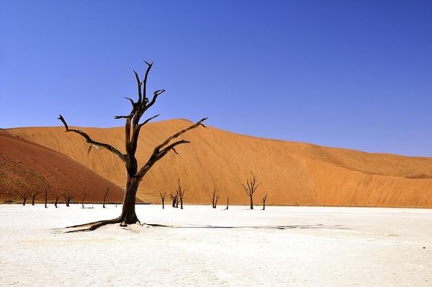 ツリーナミビアナミブ砂漠死ん粘土パンvlei 無料写真
