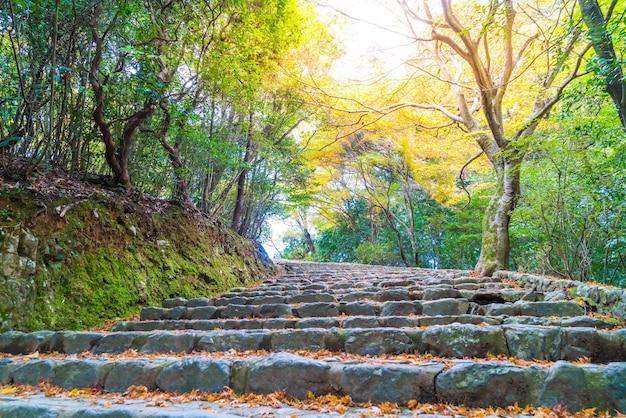 Walk way with red maple leaves blooming at arashiyama Premium Photo
