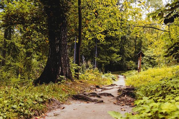 Walk in the woods Premium Photo