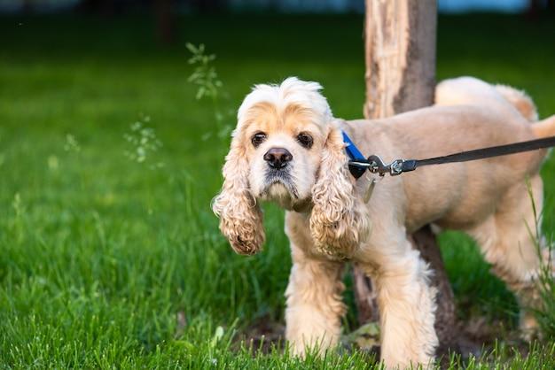 Walking dog pet with collar Premium Photo