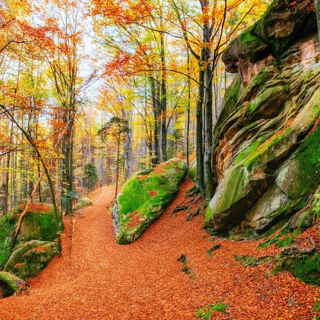 森の中の岩だらけの地形を歩いています。ウクライナヨーロッパ Premium写真