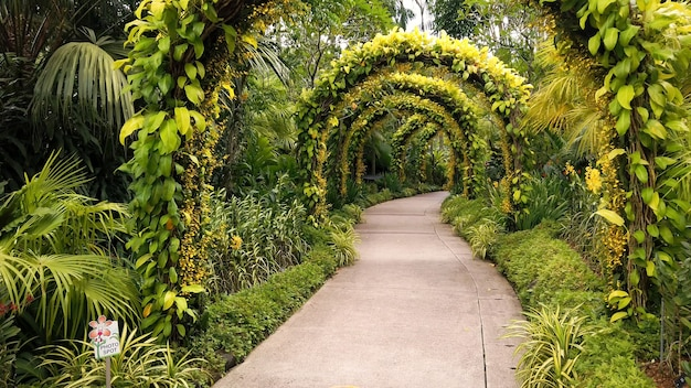 Walking path with large arches covered with green bush leaves in tropical park Premium Photo