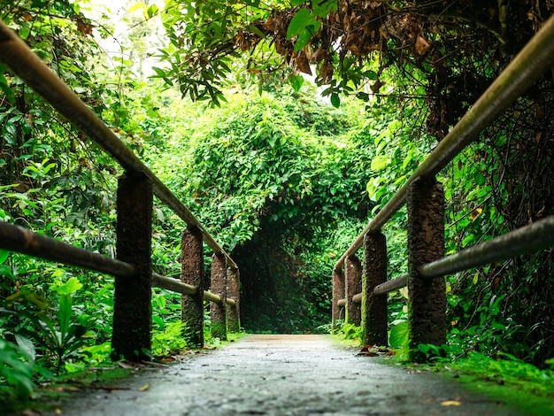 Walking trail and path way, have a beautiful greenery. Premium Photo