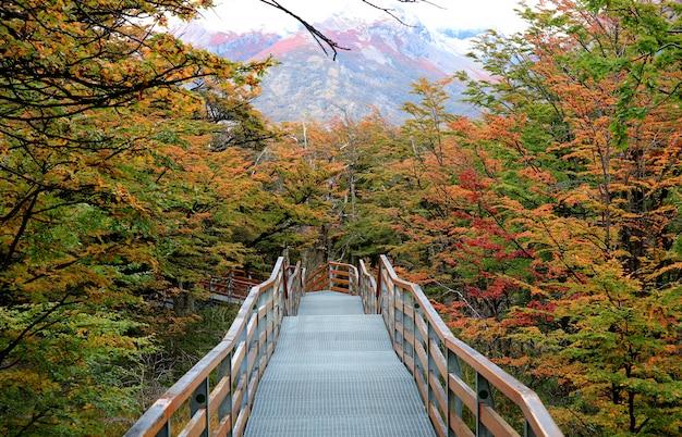 Walkway amongst beautiful fall foliage in los glaciares national park, patagonia, argentina Premium Photo