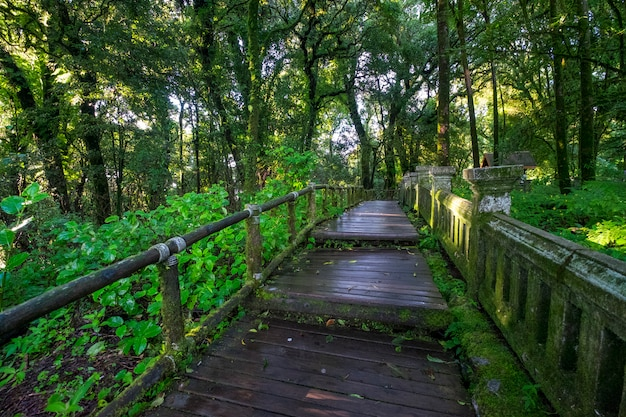 Walkway to forest Free Photo