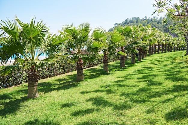 Дорожка в летнем парке с пальмами. амара дольче вита роскошный отель. курорт. текирова-кемер. турция Бесплатные Фотографии