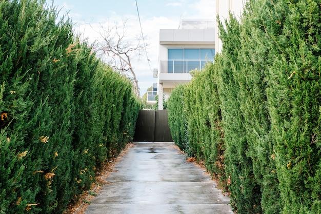 Walkway and tree Free Photo