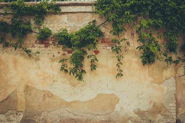 The wall covered by green leaves Premium Photo