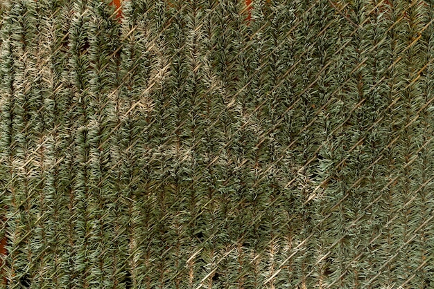 Wall decorated with pine leaves Free Photo