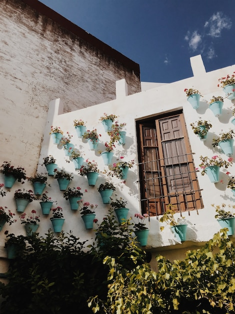 Стена с яркими цветами Premium Фотографии