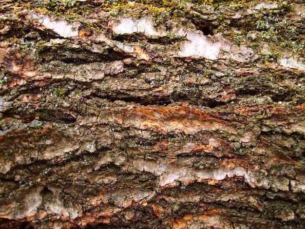 Walnut tree bark  Photo | Premium Download