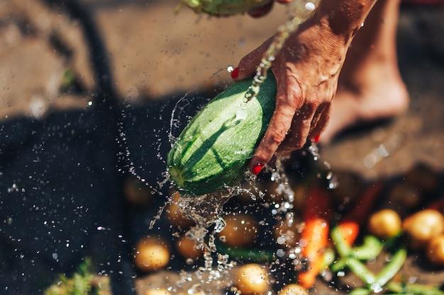Washing vegetables, woman hands wash green zucchini outdoors sun light Premium Photo