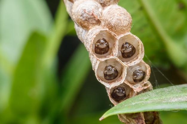 自然の中でワップの巣のスーパーマクロwaspの幼虫 | プレミアム写真