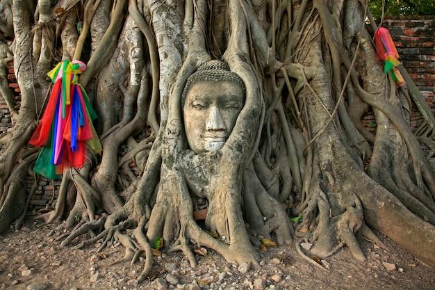 Wat mahathat buddha head in tree, ayutthaya Premium Photo