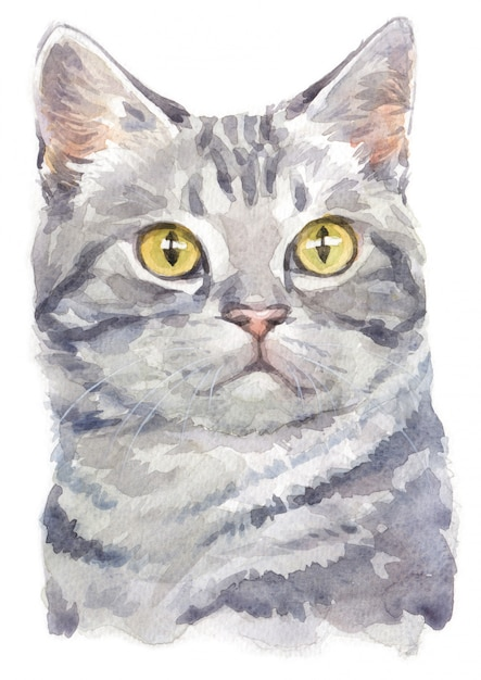 Water colour painting of american shorthair cat Premium Photo