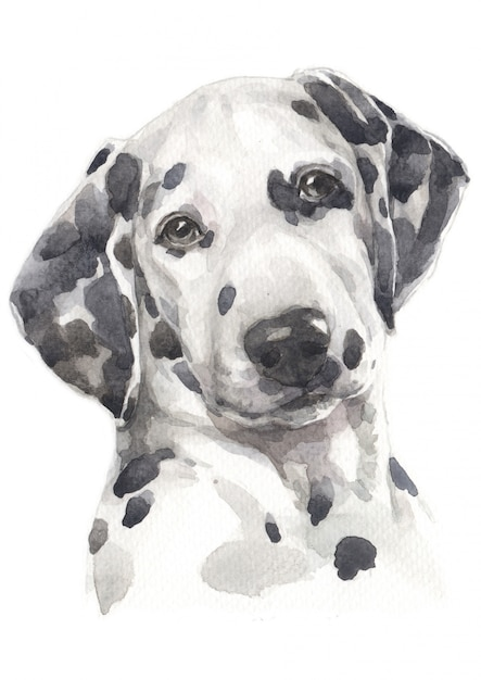 Water colour painting of dalmatian Premium Photo