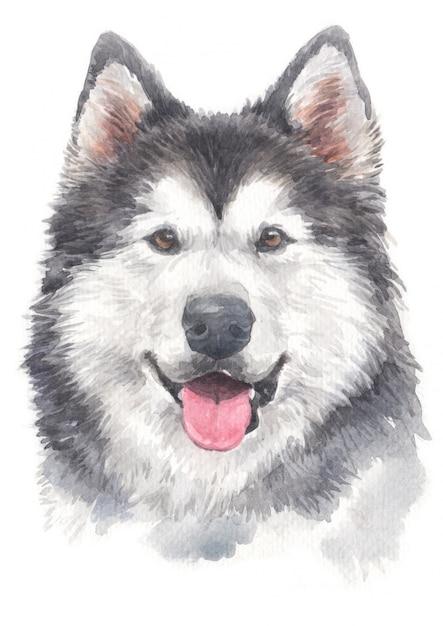 Water colour painting of siberian husky Premium Photo