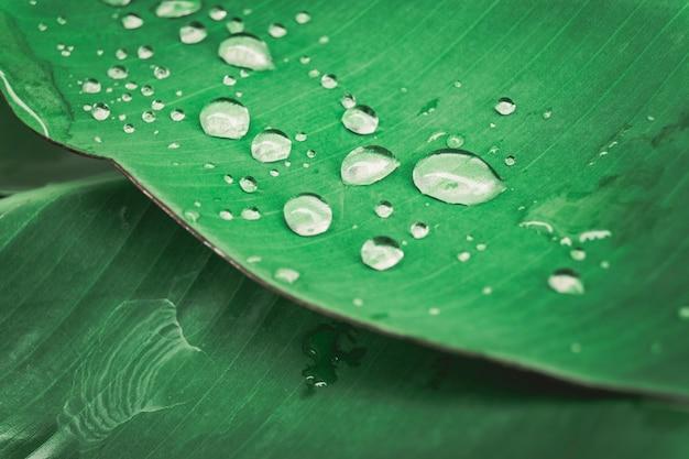 Water drop on  tree leave. Premium Photo