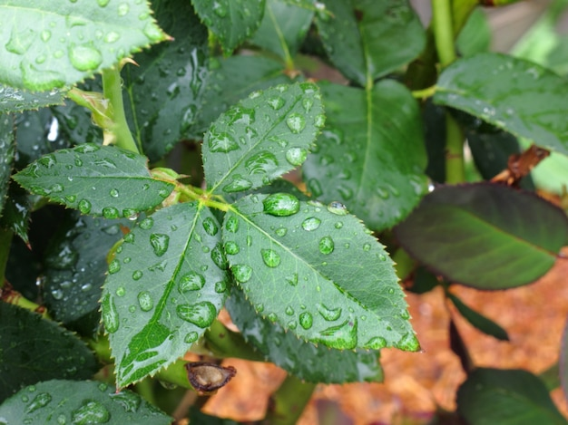 Water droplet on green leaf after rain Premium Photo