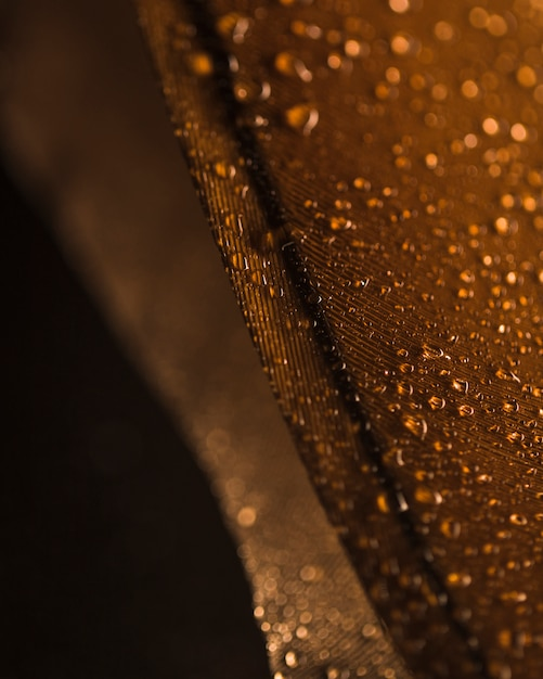 Water droplets on the brown feather surface against blurred backdrop Free Photo
